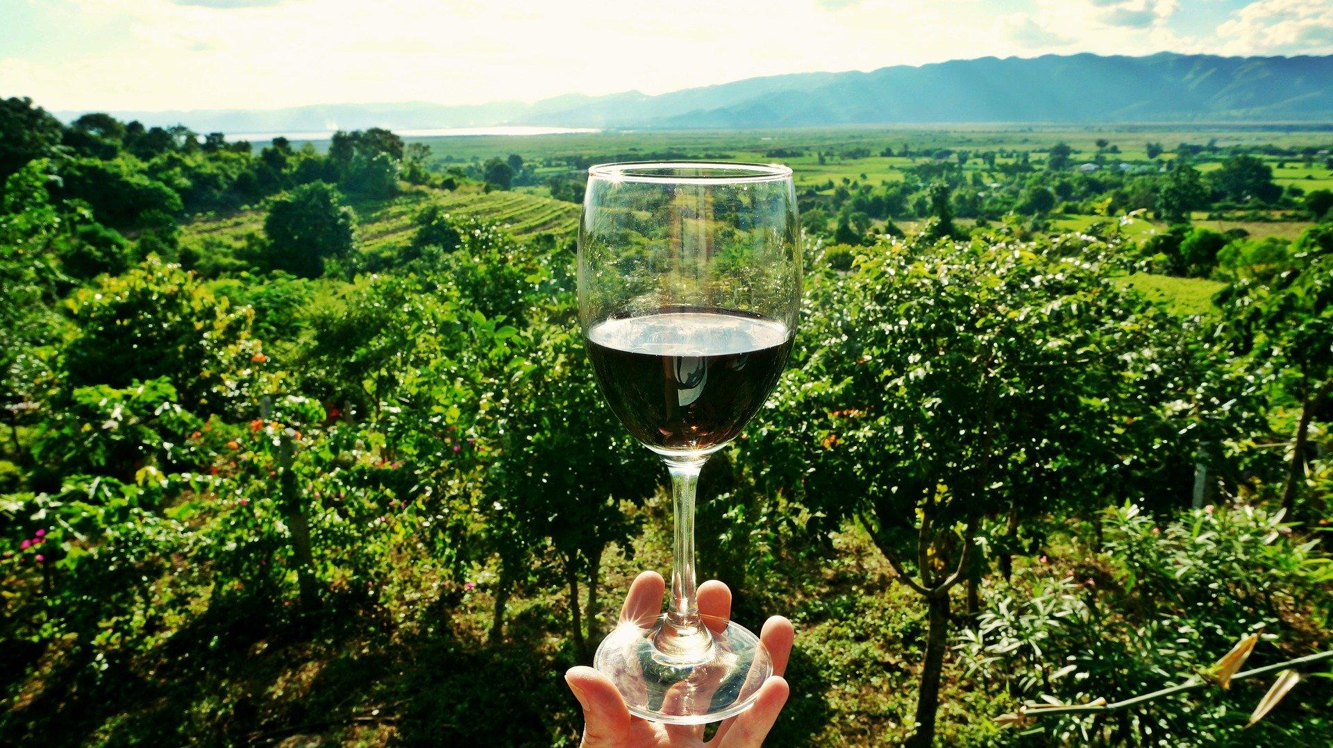 Principali differenze tra Enologi, Sommelier e Degustatori di vini